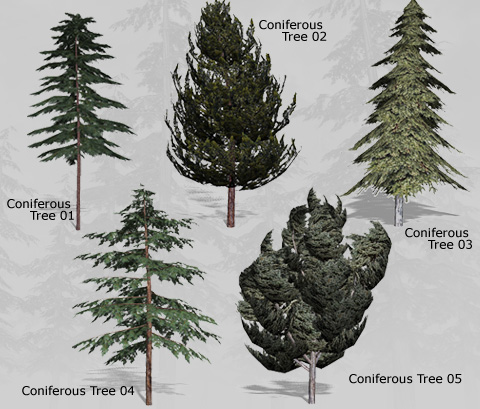 plants in the coniferous forest Coniferous forest biome - location, climate, temperature, precipitation, plants and trees, animals - aen news posted by magda savin on august 28, 2017 a red spruce tree in the coniferous forest.