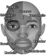 روعة : برنامج للتعديل على الوجوه  Keyfeature2_1